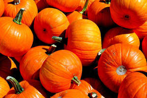 Fall Pumpkins by jerryfrencho
