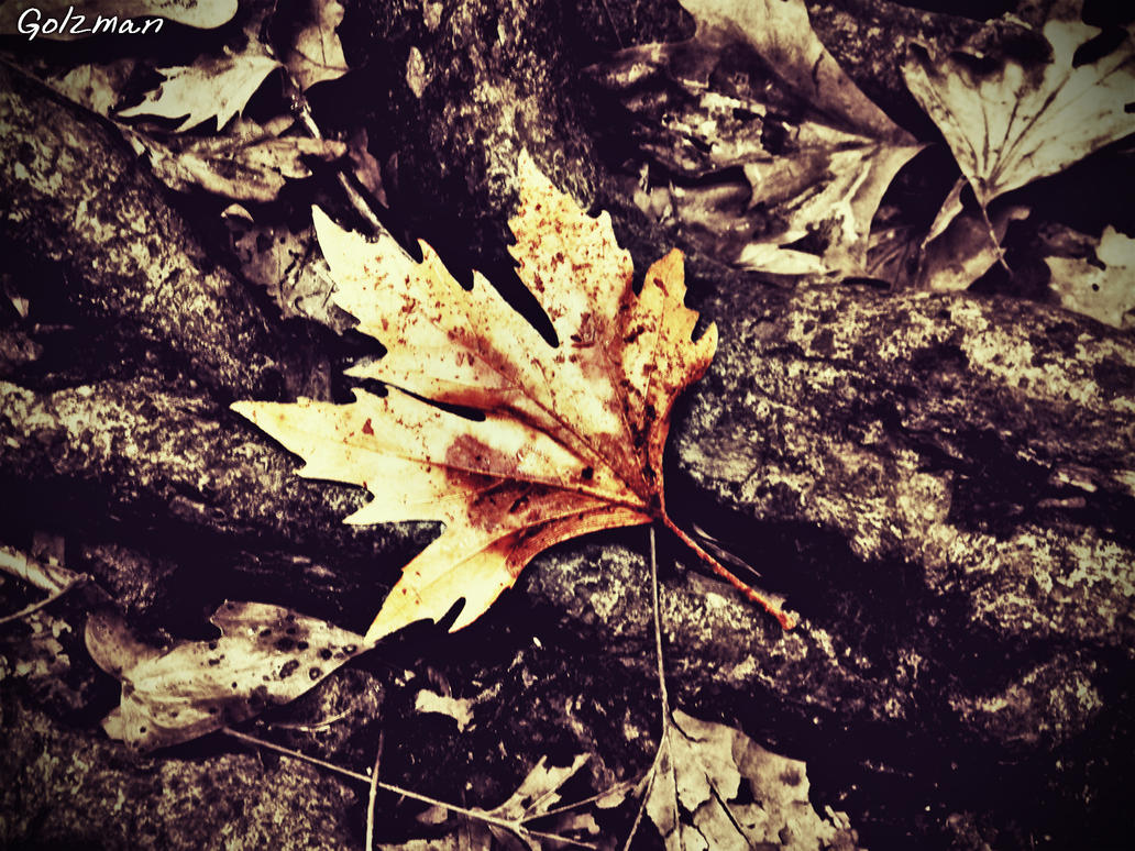 The leaf of Fall by Golzman