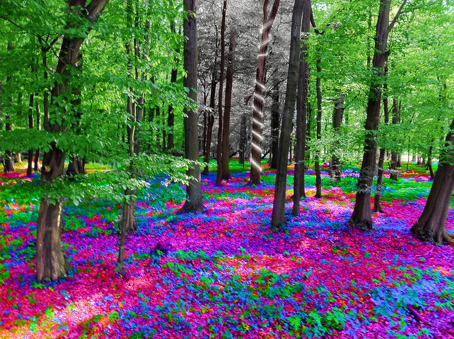 zauberwald by ringding01 on DeviantArt