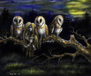 Owls by iscalox