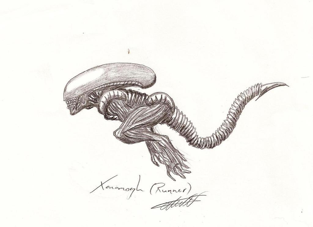Runner Xenomorph by Qodaet  Xenomorph Runner
