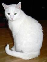 Cat Stock 008 by JoalitaLadyStock