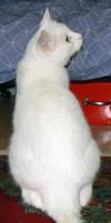 Cat Stock 014