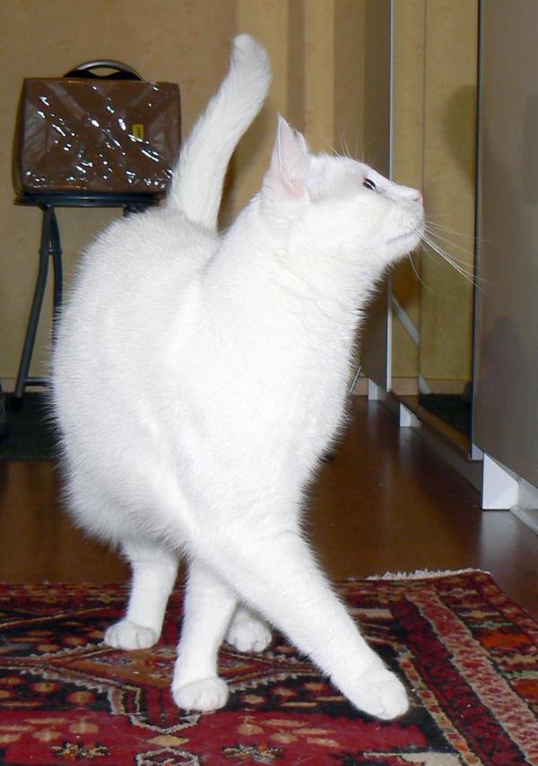 Cat Stock 001 by JoalitaLadyStock