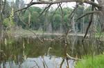 swamp 0218