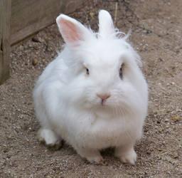 Bad Hair Bunny 1