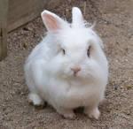 Bad Hair Bunny 1 by darchiel