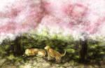 Kosuke and Sakura