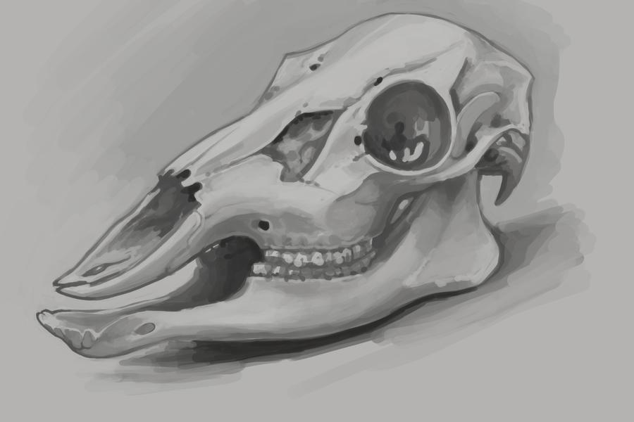 210112 Deer Skull Study by TypoCity on DeviantArt