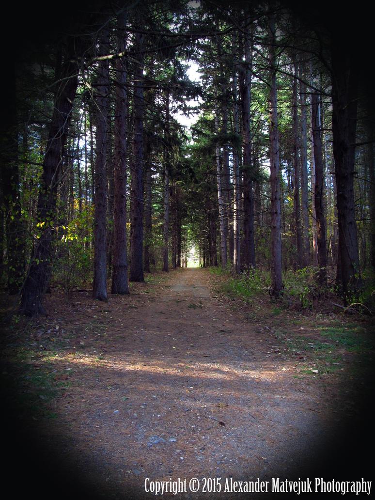 Woodland Walkway by numb1