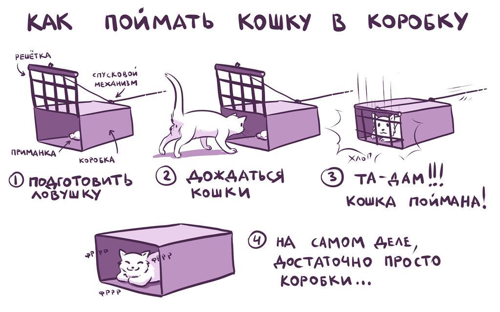 Как сделать ловушку для кошки в домашних условиях видео