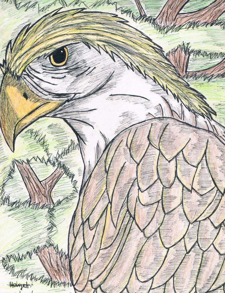 Philippine eagle by Hazel-mendoza on DeviantArt