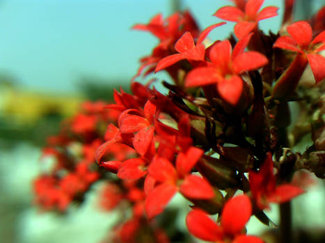 Delicate Little Flowers