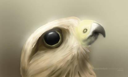 hawk eye by psychoduck