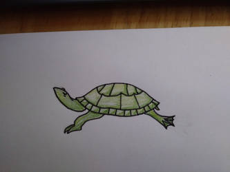 Turtle by Silvia4