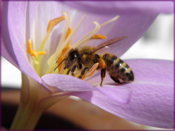 Violet ::: Bee... by Tian-samaaaa
