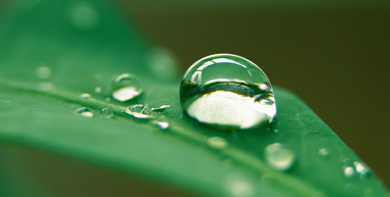 Water Drop on Leaf by bleu3tWater Drop Photography On Leaf
