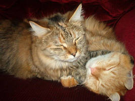 My cats by DemonVampire13