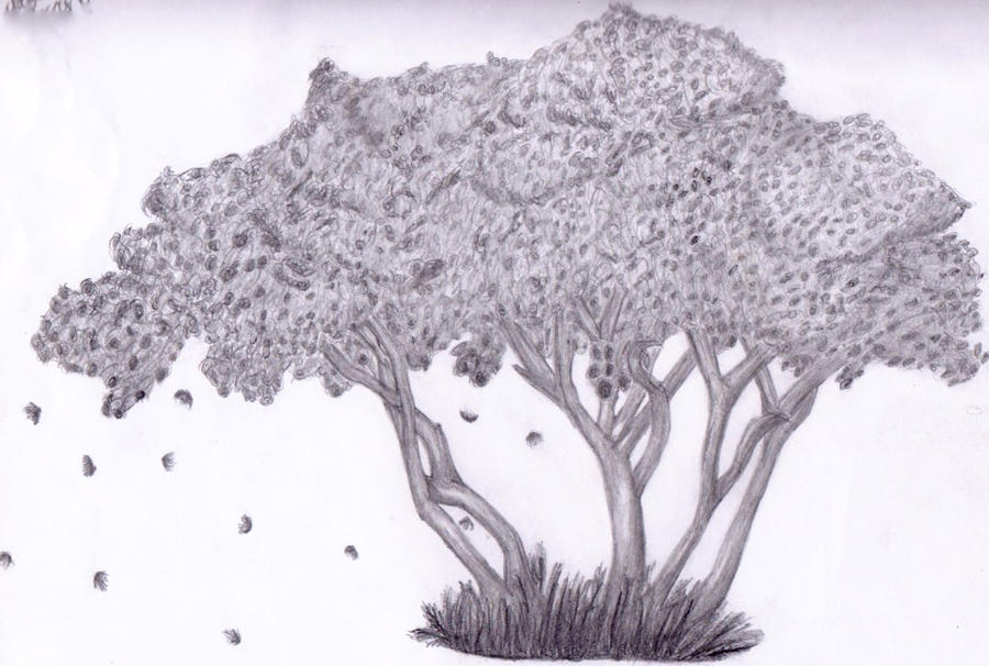 How To Draw A Cherry Blossom Tree In Pencil Cherry blossom tree by casket-