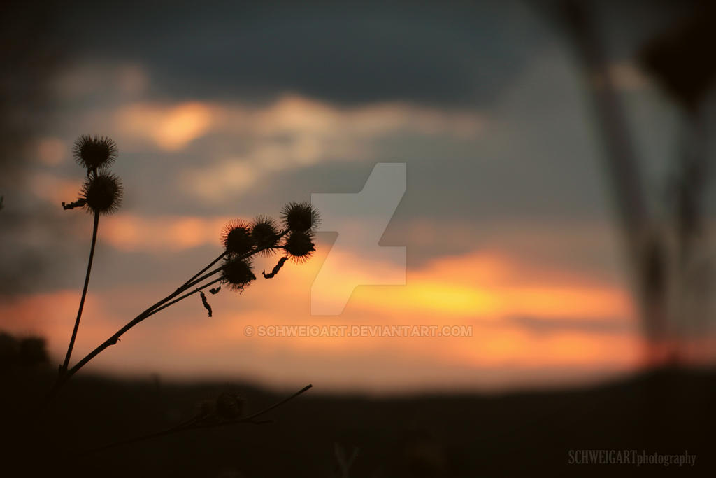 Sunset Reality by Schweigart