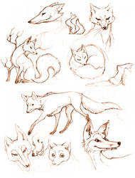 Foxy Sketches