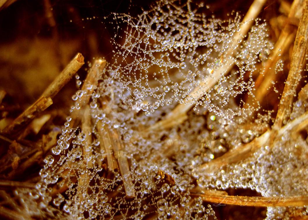 Sparkling Dew by JessyFTW