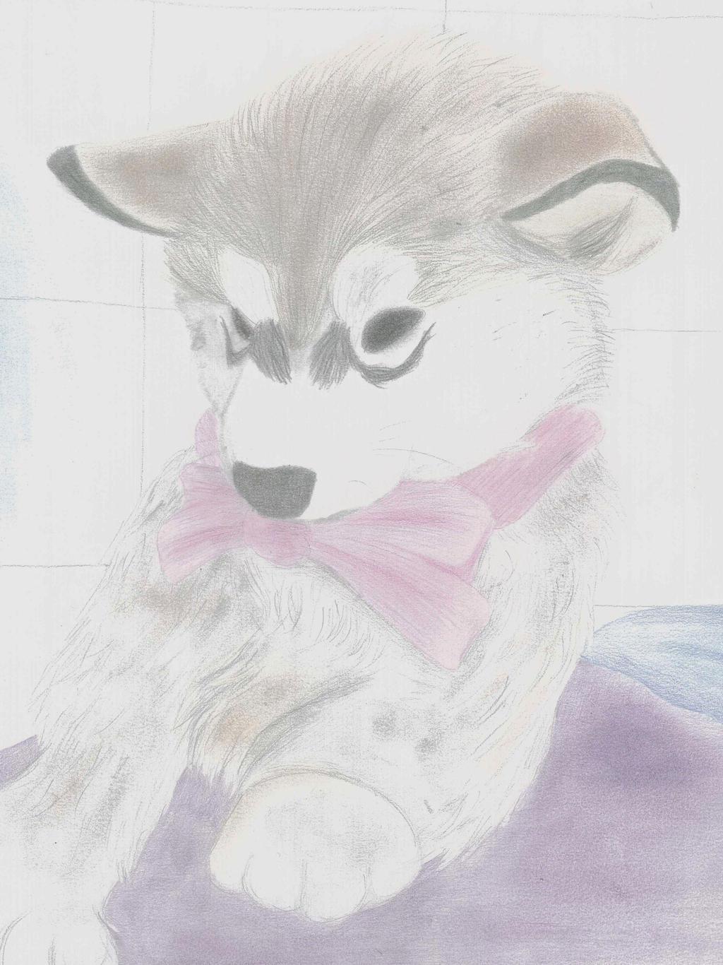 cutie cute husky puppy by aussie0 traditional art drawings animals    Cute Husky Puppy Drawings