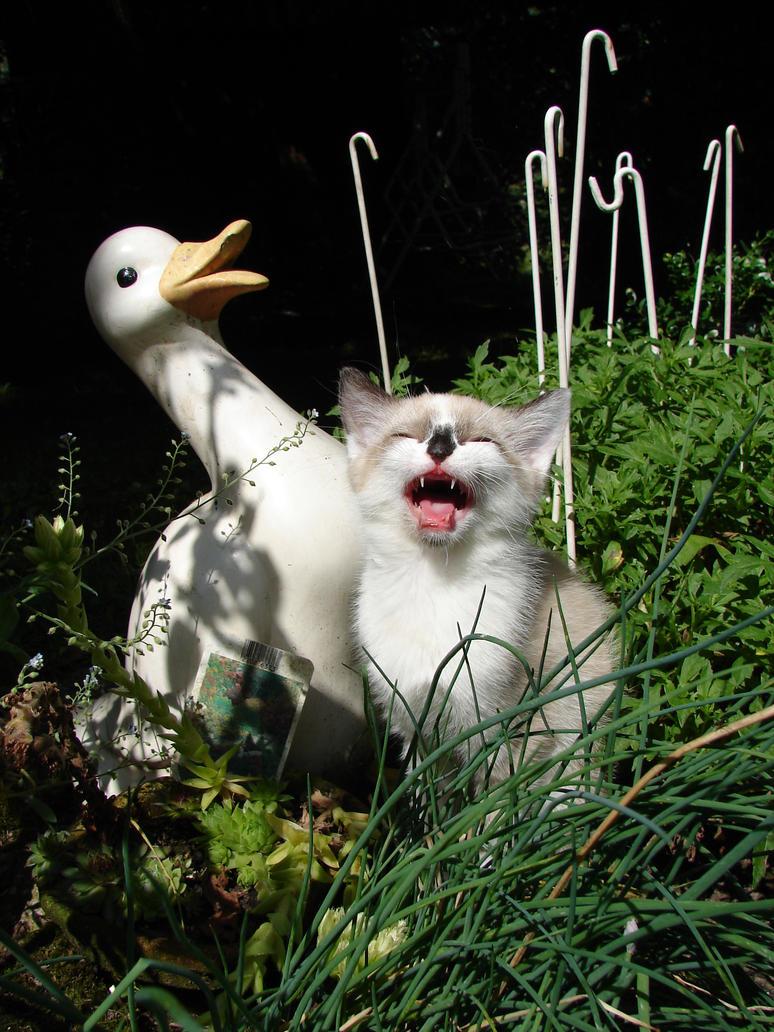 Tiga's cat by Saypher