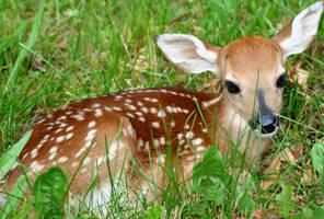 Deer by LoonyMuffins