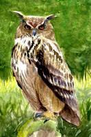 Owl by MarthaDeAth
