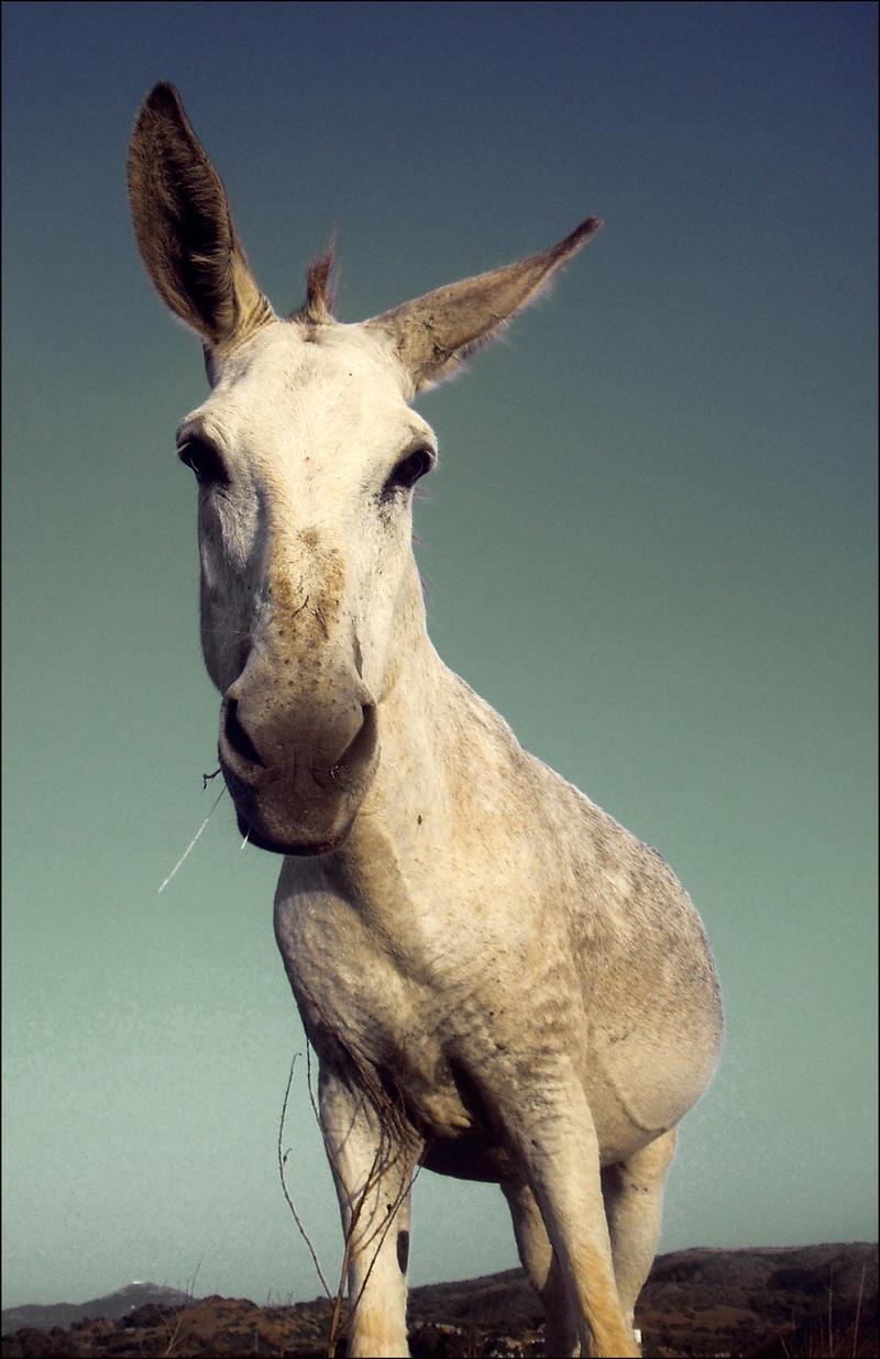 Free Donkey by SaraBunny