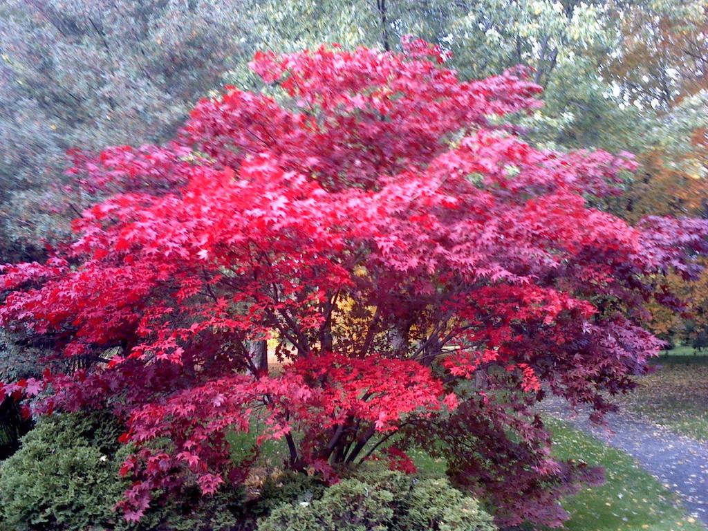 Http Nina1410 Deviantart Com Art Pretty Pretty Pretty Tree 393479139