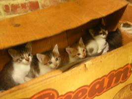 Kittens by ff9fan99