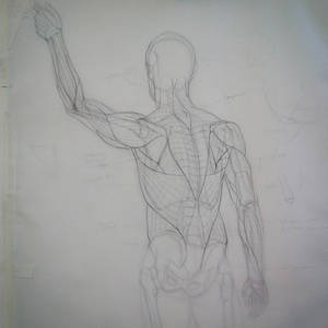 Adding muscles