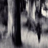 Dead shadows by EbruSidar