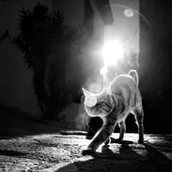 catwalk by EbruSidar
