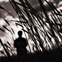 dear wind