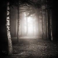 twilight by EbruSidar