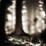 little dreams, big world by EbruSidar