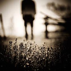 goodbye stranger by EbruSidar