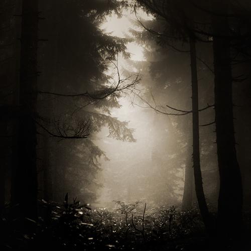 Under the dead tree by EbruSidar