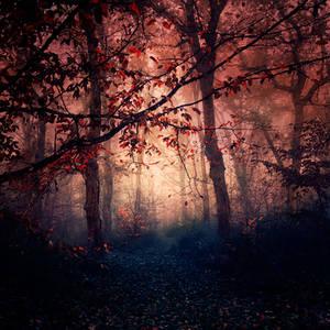 Empty Paths by EbruSidar