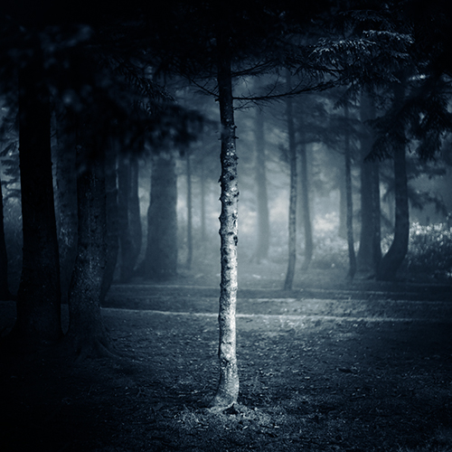 Tales from the Forest by EbruSidar
