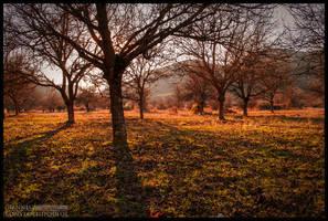 Dreamland by toyotaTRD