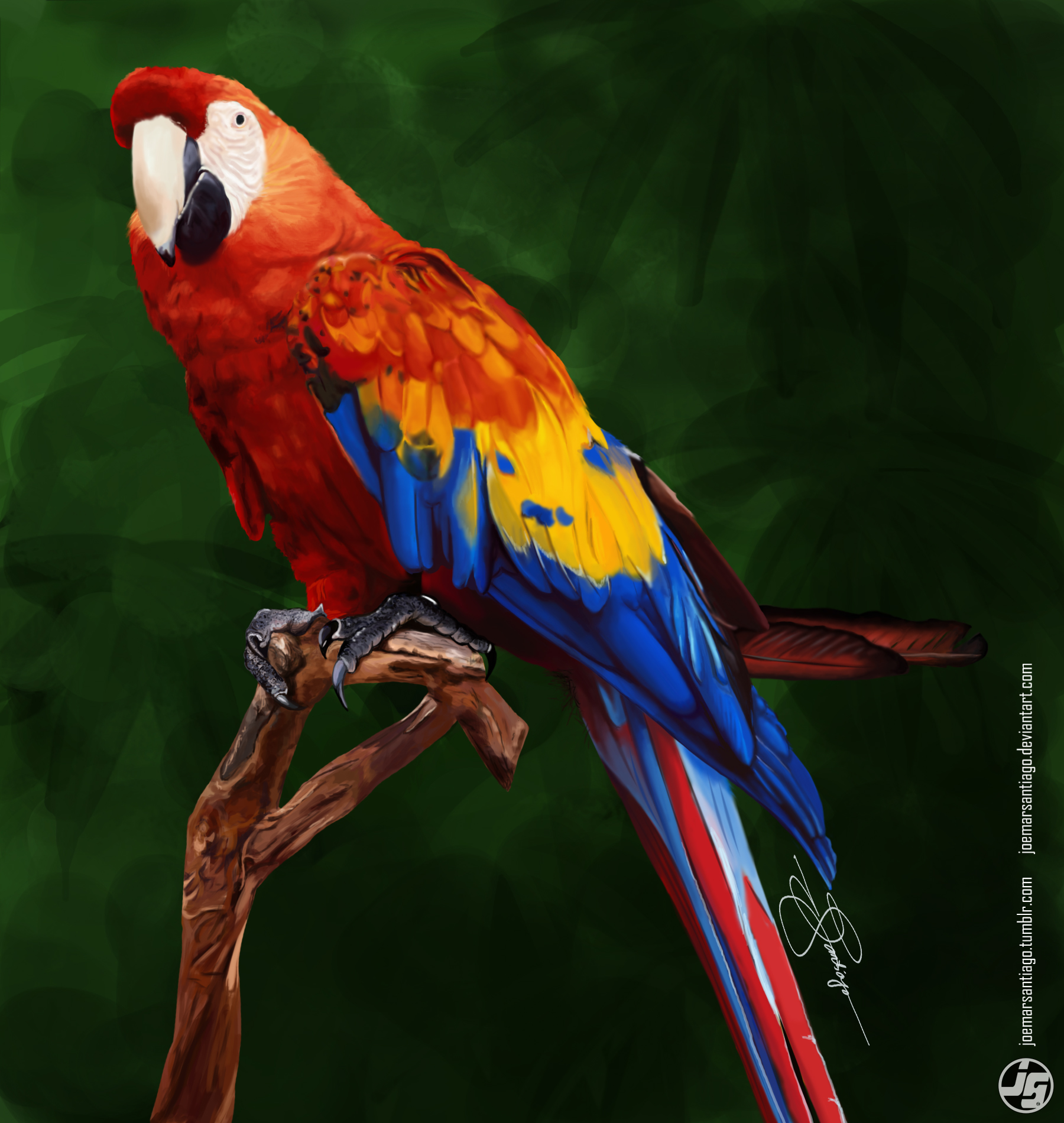 the gallery for gt scarlet macaw painting