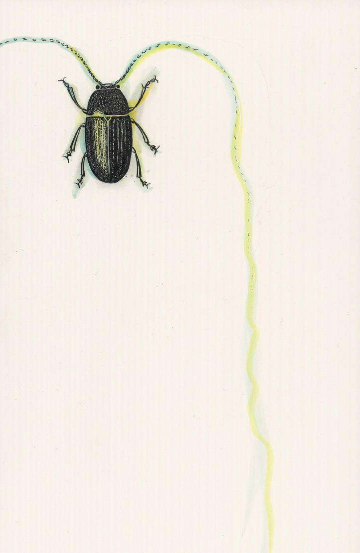 beetle by matt136