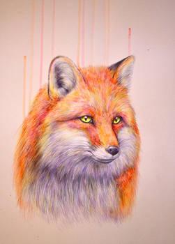 Study of a Fox