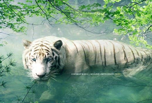 Lonely Tiger 2