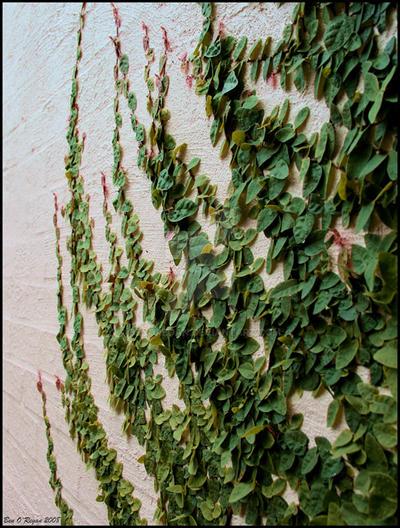 Creeping Up The Wall by benoregan