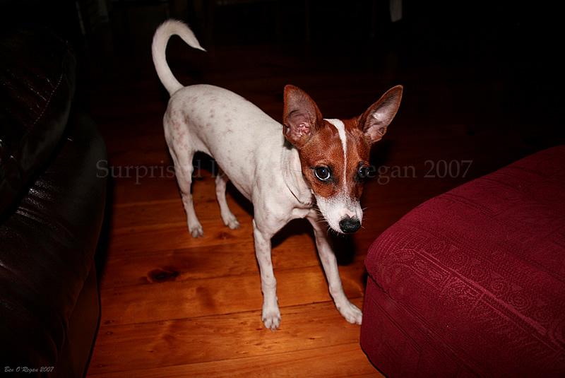 Surprised Dog by benoregan